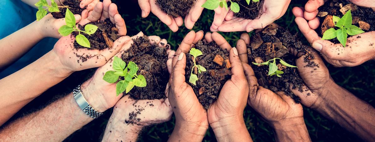 O que o cooperativismo tem a ver com a sustentabilidade?