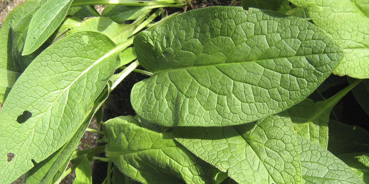 7 plantas com poderes medicinais e repelentes o seu for Planta decorativa toxica